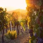 Wijnregio's Portugal