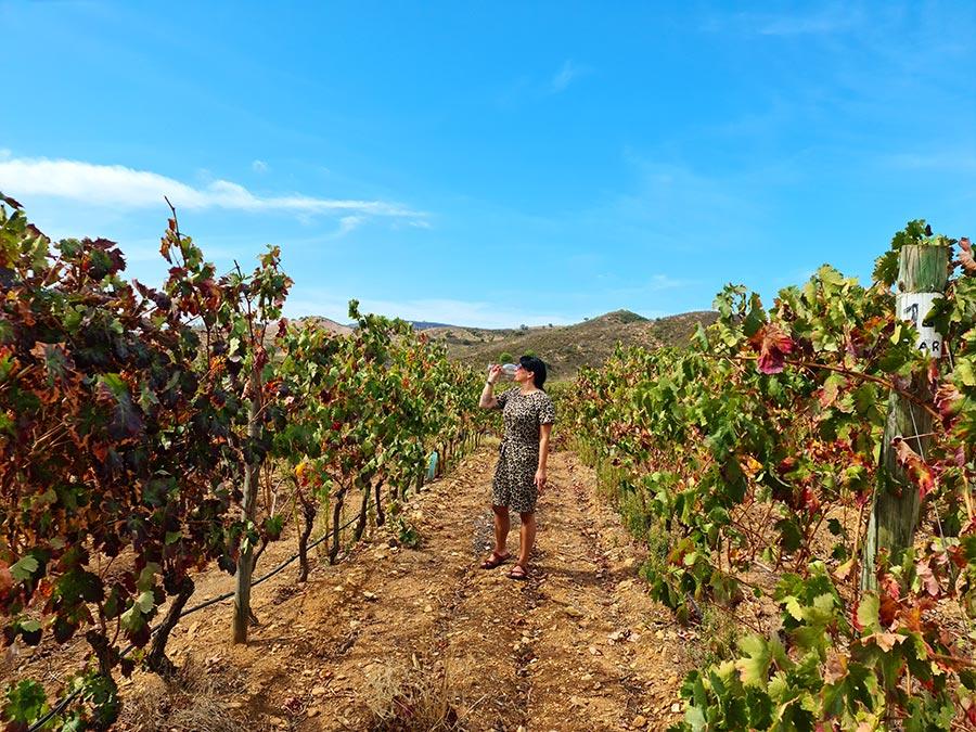 Wijnproeverijen Algarve