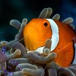 OceanXplorers Azoren