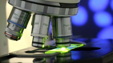Estudo: Anticorpos cooperam para lutar contra infeções como o ébola