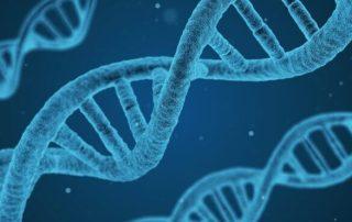 genoma adn dna