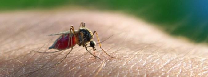 Mortes por sida, tuberculose e malária vão aumentar, alertam especialistas