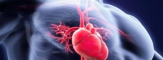 Células estaminais com potencial no tratamento da Cardiopatia Isquémica Crónica