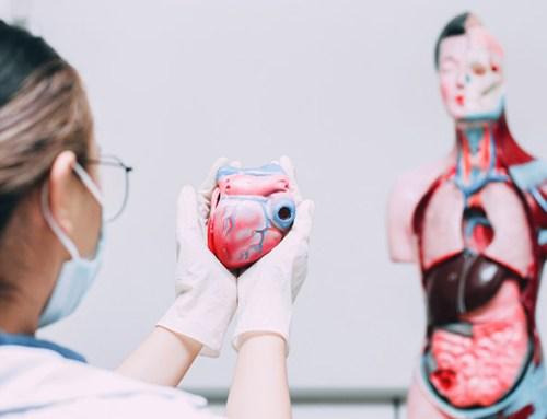 Pós-revascularização miocárdica. Inquérito confirma melhoria na qualidade de vida