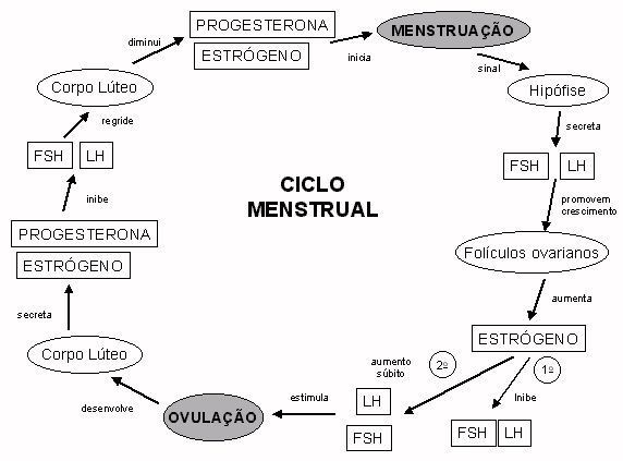 Ciclo menstrual.jpg