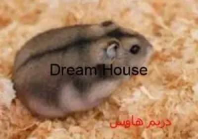 اسماء الفئران وانواعها