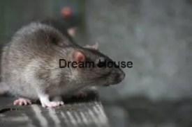 اسماء الفئران