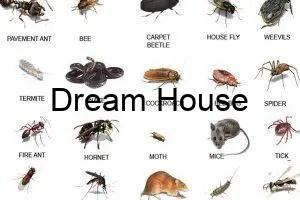 انواع الحشرات واسمائها معلومات هامة .. تعرف عليها