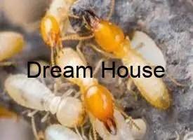 هل النمل الابيض يقرص
