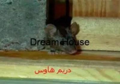كيف اقضي على الفئران في بيتي