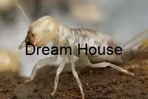 كيف تقضي على النمل الابيض