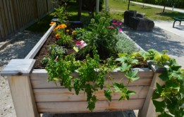 POrt Egin Raised Bed