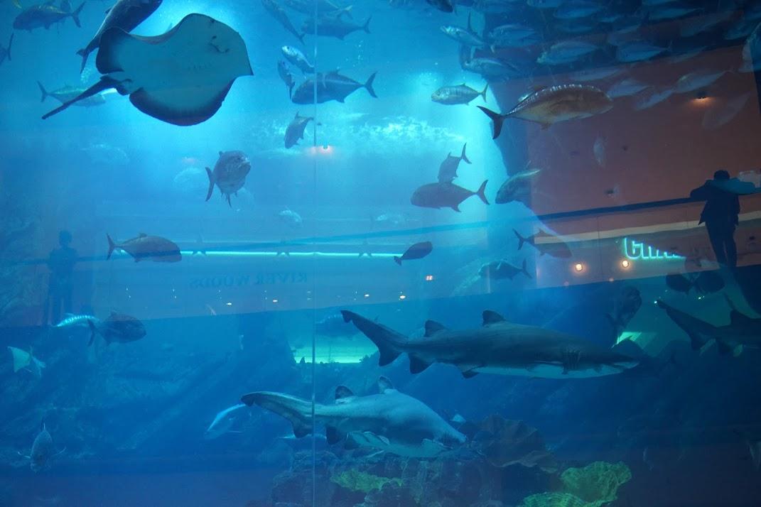 Ką verta pamatyti - tai Dubajiškas Megos akvariumas :)