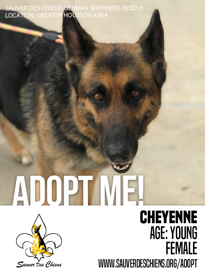 Click image to learn more about Cheyenne!