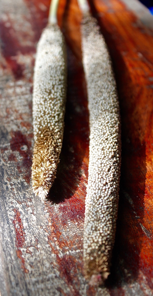 recipe-testing-finger-millet