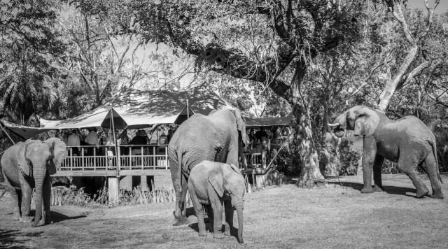 The Elephant Café.