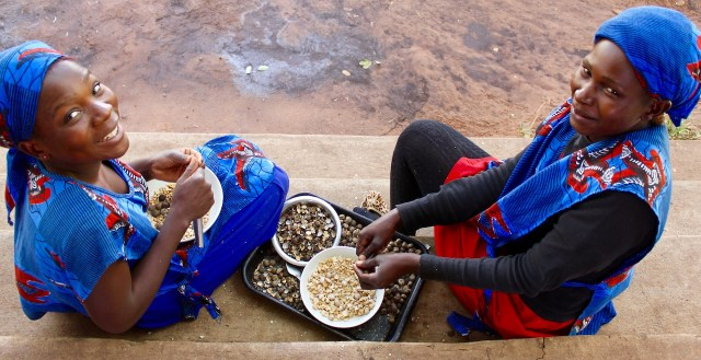 Maggie Mundia and Sandra Labetwa helping shell the mongongo nuts at the farm.