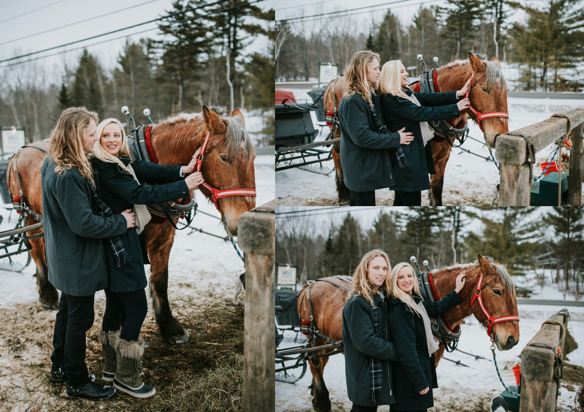 Sleigh Ride Horses and Newly Engaged