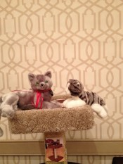 Savvy and Nissy liked this cat tree