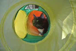 Thank Ceiling Cat for the tunnel