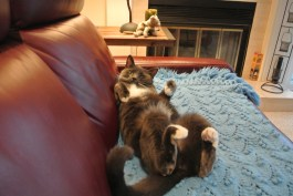 What? I am comfy this way!