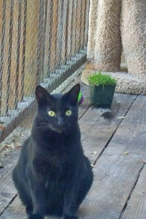 Yes, I am right in front of you...and I am a black panfur girl