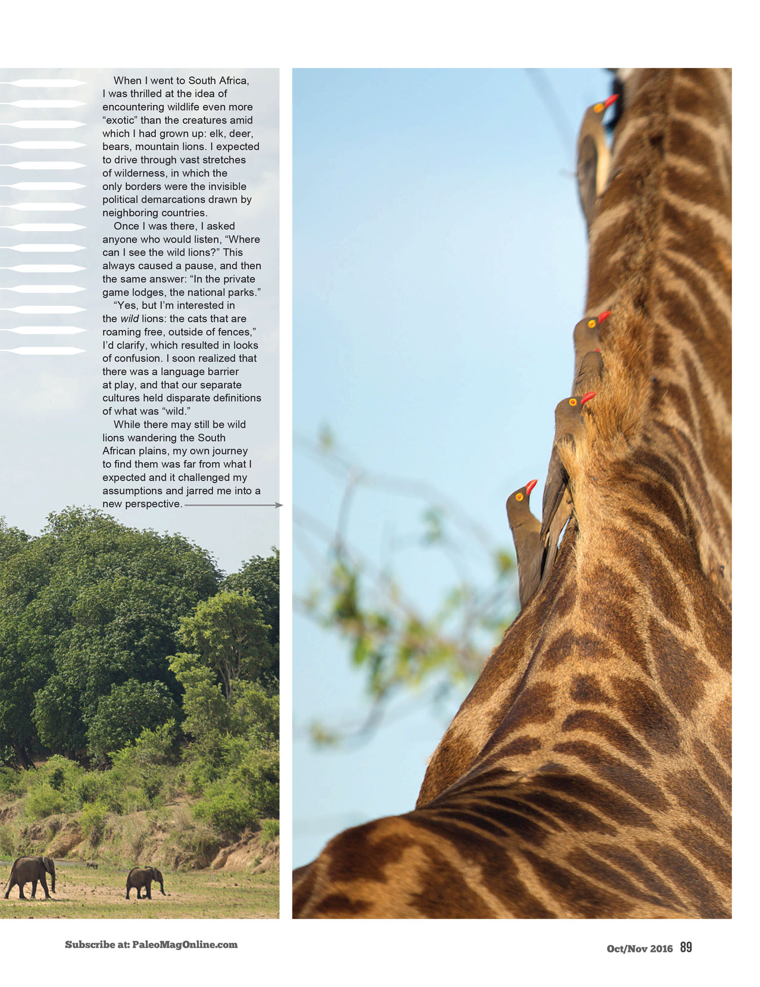 What does it mean to be wild? Article for Paleo Magazine on Kruger National Park - Giraffe & Oxpecker