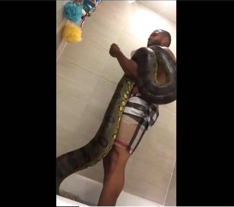 Video: Mpumalanga slay queen goes AWOL after leaking videos of blesser bathing with snake