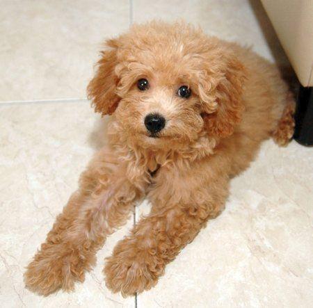 adopt a cat or a dog at savearescue