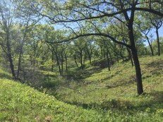Miller Woods Post Restoration Photo 3