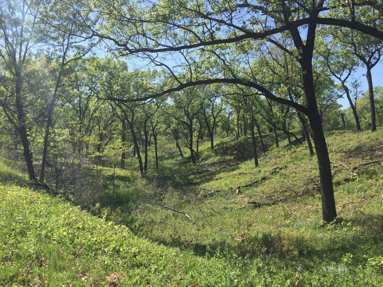 Miller Woods Post Restoration Photo 3