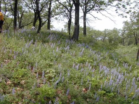 Miller woods