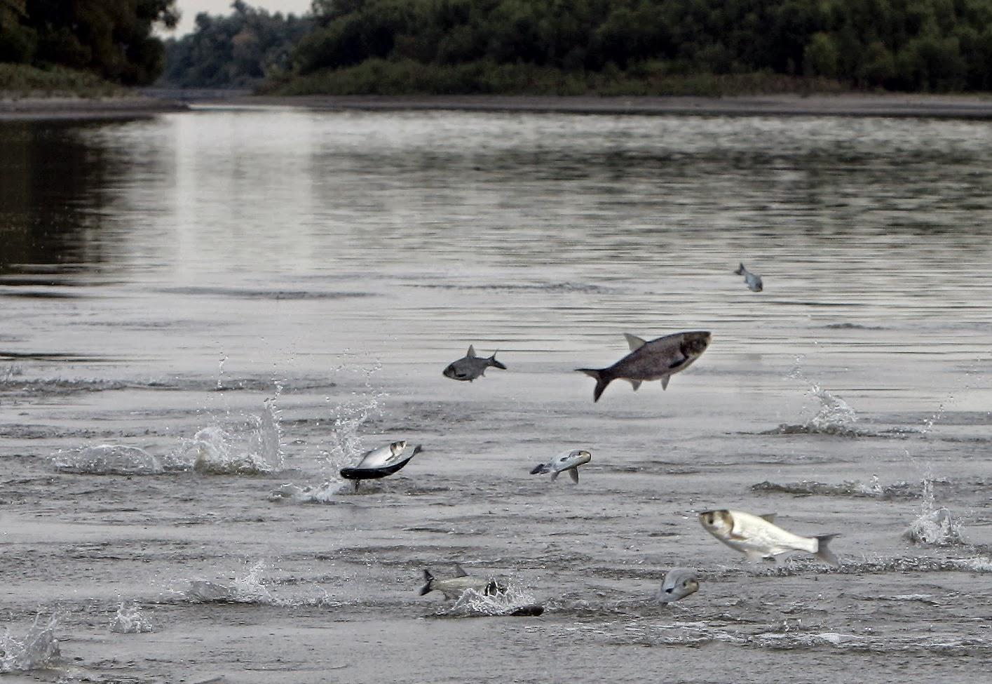 Idea congratulate, Asian carp barrier consider