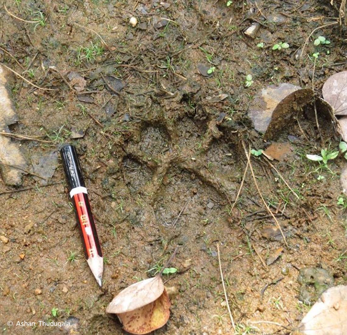Searching-for-fishing-cats_Ashan-Thudugala2