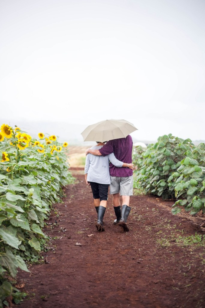 a middle-age couple walking under umbrella along the sunflower field