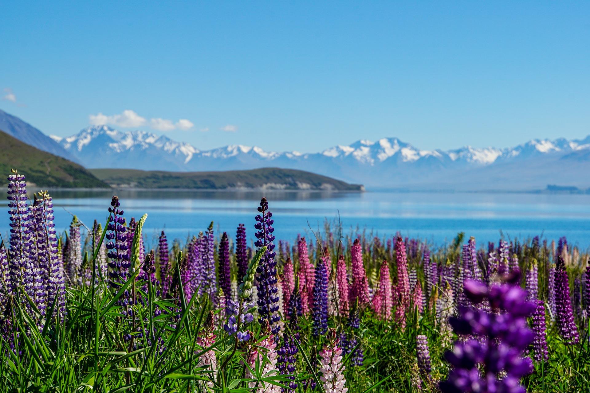 flowers-lake-mountains - travel off-season
