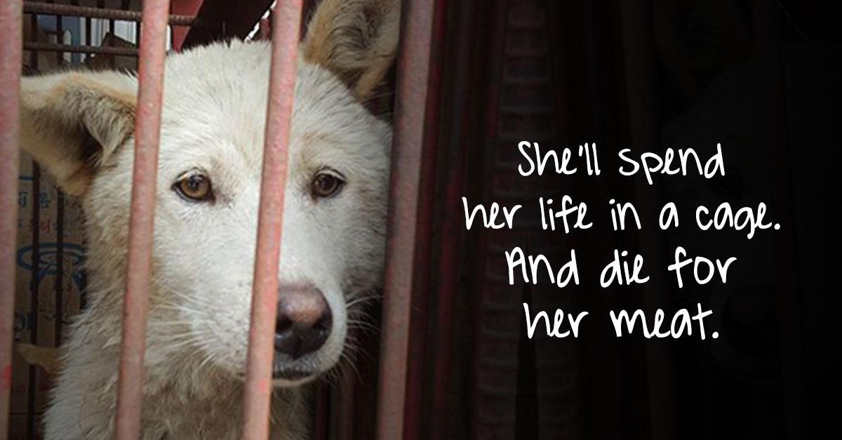 Shut down South Korean dog meat farms