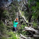 savemore tree service tree trimming loxahatchee