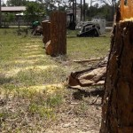 Tree Removal Loxahatchee, West Palm Beach, Royal Palm Beach