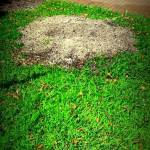 Stump Grinding Loxahatchee, Palm Beach County, Wellington, Royal Palm Beach - SaveMore Tree Service
