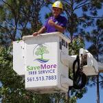 Tree Removal in Loxahatchee, Royal Palm Beach and Wellington - SaveMore Tree Service