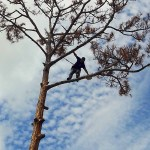 Tree Service West Palm Beach, Loxahatchee, Royal Palm Beach, Wellington, Palm Beach Gardens, Jupiter and all of Palm Beach County