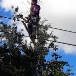Emergency Tree Removal Locahatchee, wellington, royal palm, palm beach gardens, jupiter - savemore tree service