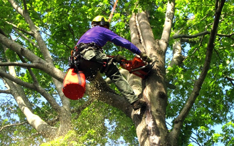 Tree Removal Services Loxahatchee SaveMore Tree Service