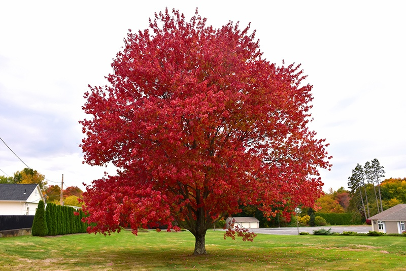 3 Florida Trees That Produce Fall Colors
