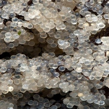 Ecosystems & Wildlife : The Danger of Nurdles & POPs – Video & Audio