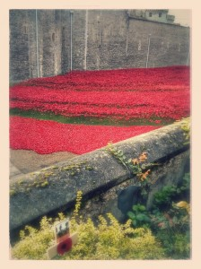 Porcelain poppies at the Tower of London - in memoriam