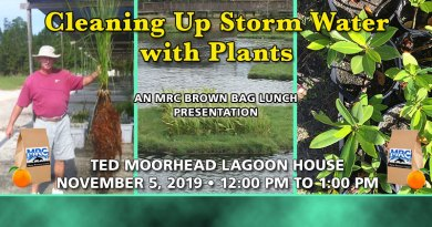 Cleaning Up Storm Water with Plants