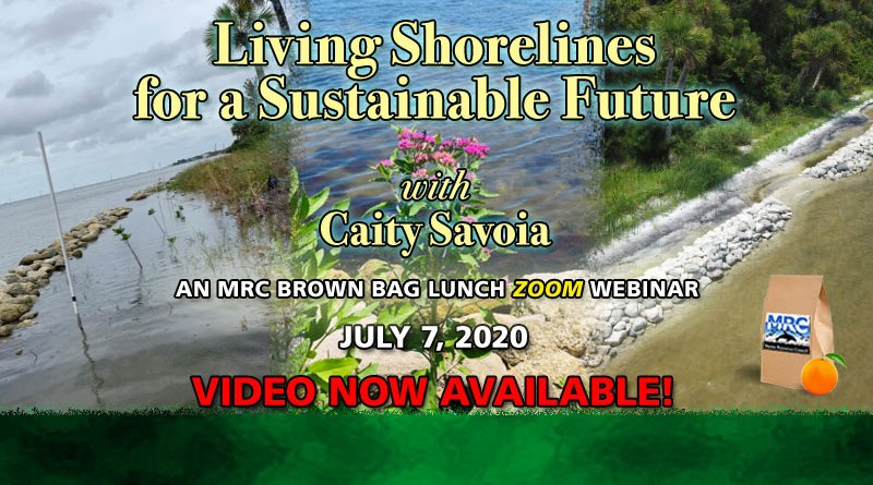 """July 7 Virtual Brown Bag Seminar """"Living Shorelines for a Sustainable Future"""