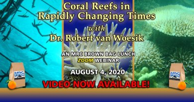 Coral Reefs: August 2020 Lunch & Learn Webinar